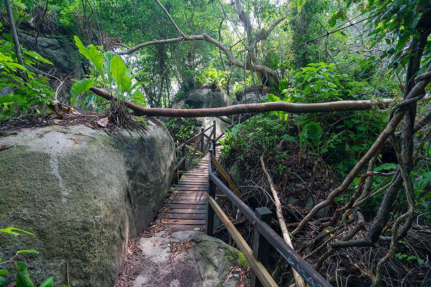 The Dense Jungle Trail