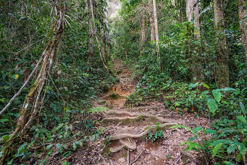 Trail 7 Cameron Highlands, Malaysia