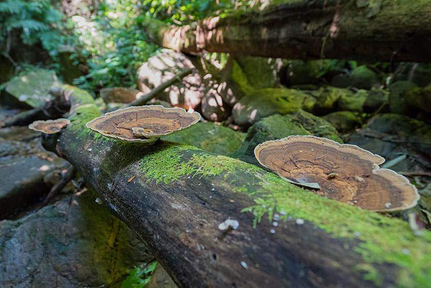 Mushrooms Khao Sok National Park, Thailand