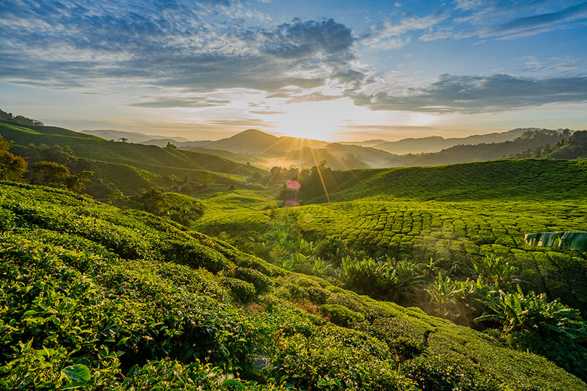 The Ultimate Guide To Hiking In The Cameron Highlands, Malaysia