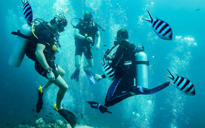 Diving In Koh Tao, Thailand – One Of The Cheapest Places In The World To Learn