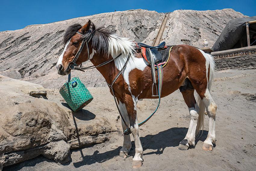 Horses On Mount Bromo, Indonesia