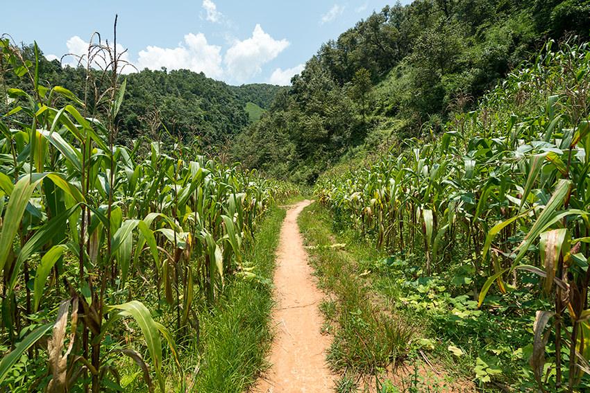 Corn Fields Ha Giang Loop, Vietnam