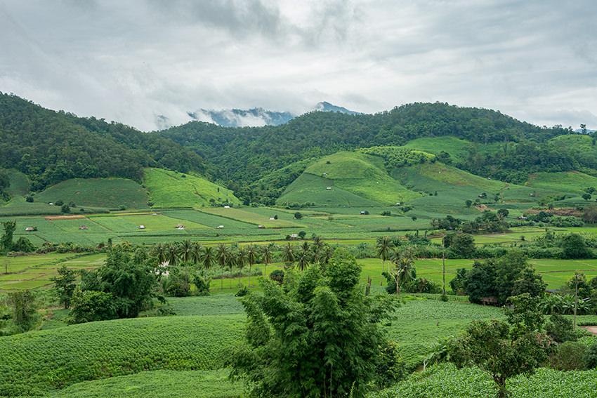 The Thai Countryside